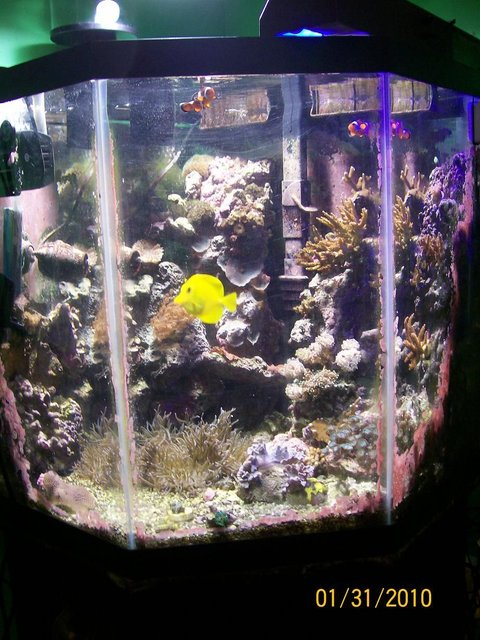 Rated #107: 55 Gallons Reef Tank - my 55 gallon reef tank