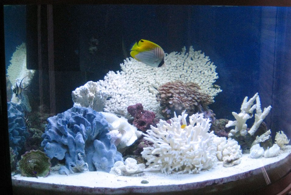 Rated #109: 40 Gallons Reef Tank - 40 gal tank to look at at work
