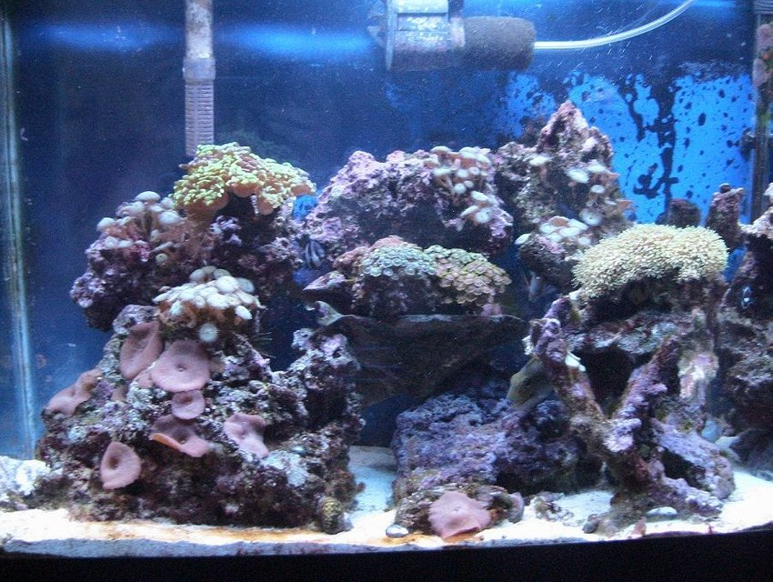Rated #101: 55 Gallons Reef Tank - The Setup...A Little Bit Of Everything