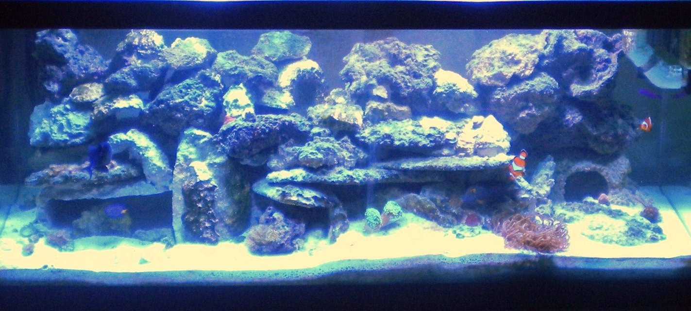 Rated #104: 75 Gallons Reef Tank - 75 Gal Main Tank