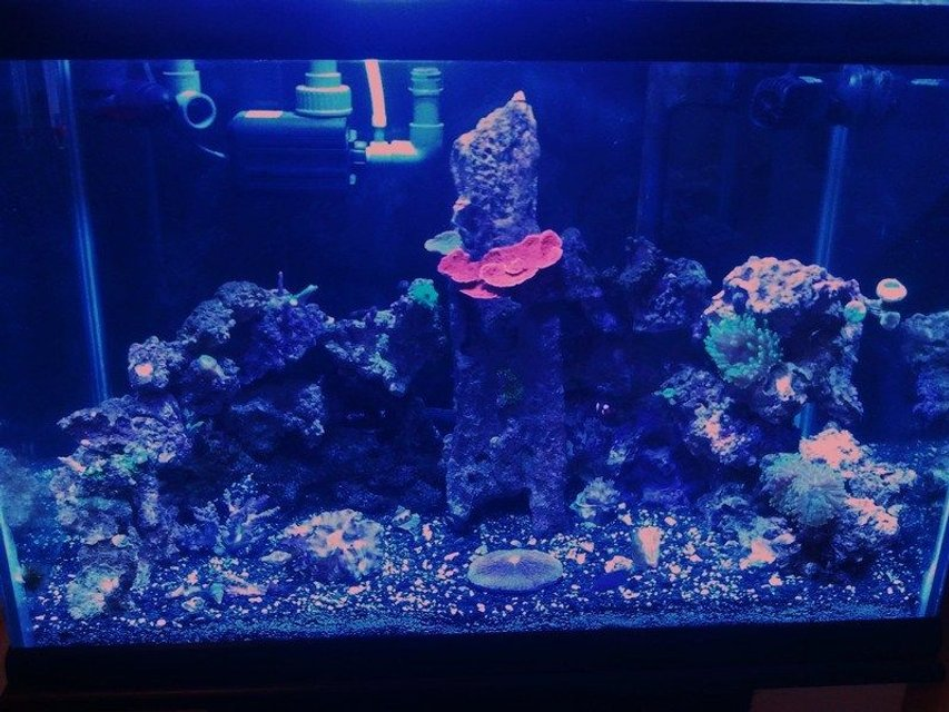 Rated #120: 58 Gallons Reef Tank - Full tank shot