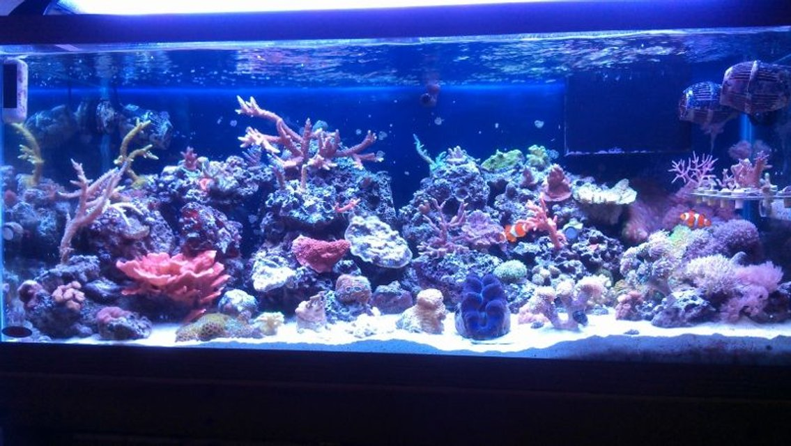 Rated #3: 75 Gallons Reef Tank - full tamk