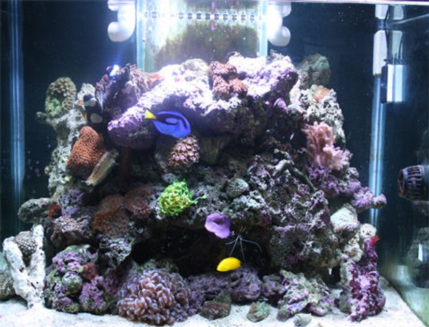 Rated #31: 85 Gallons Reef Tank - My Marine Tank