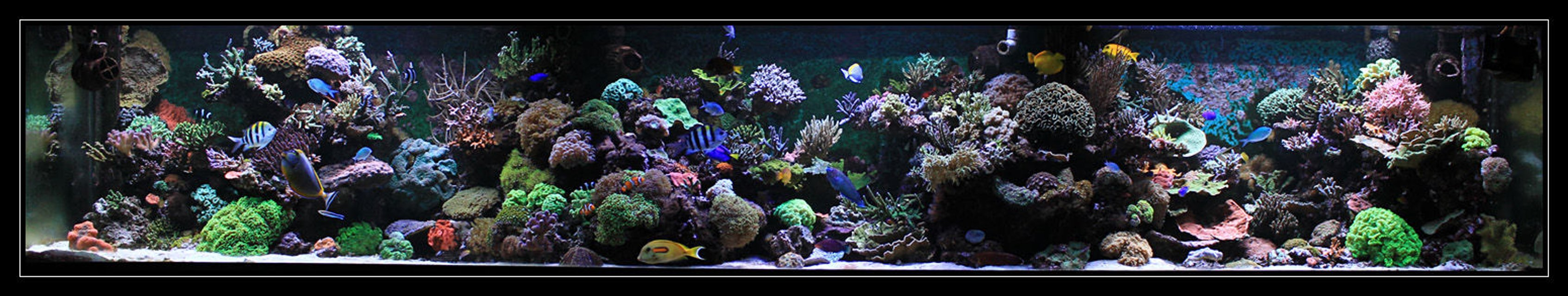 Rated #13: 554 Gallons Reef Tank - my reef tank