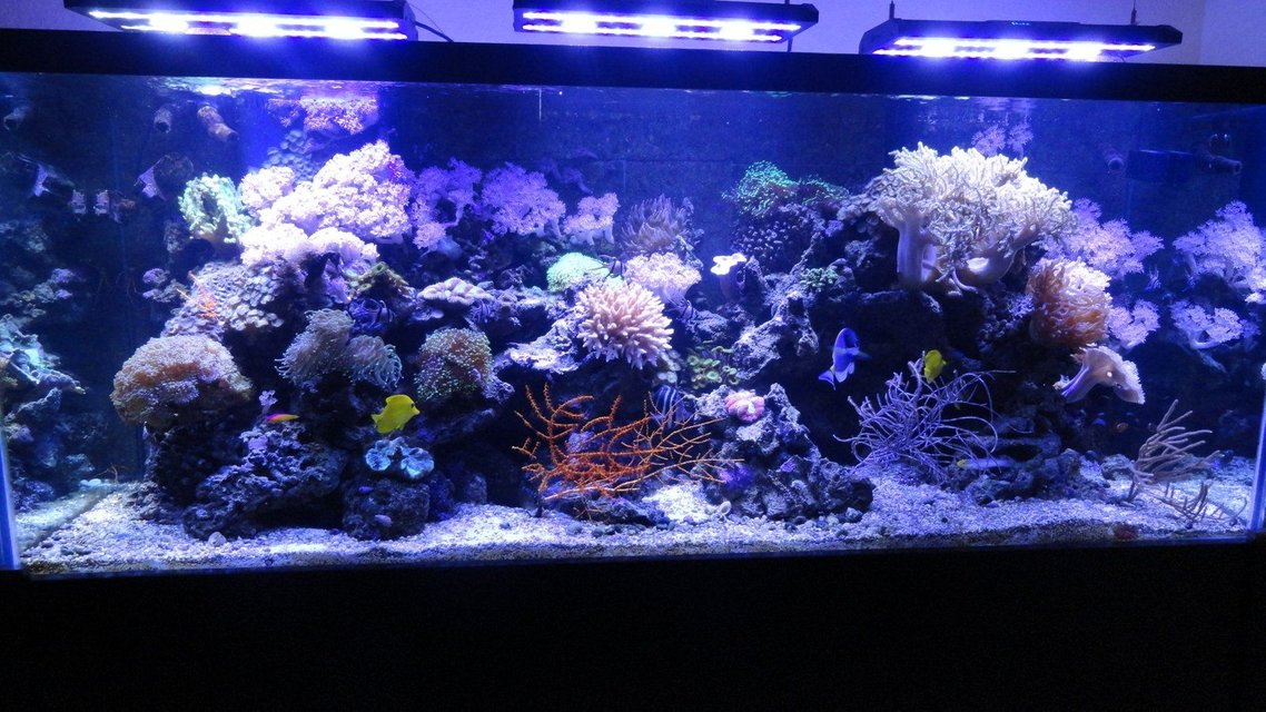 Rated #12: 220 Gallons Reef Tank - 220 Gallon Reef Tank with Acan LED Lighting