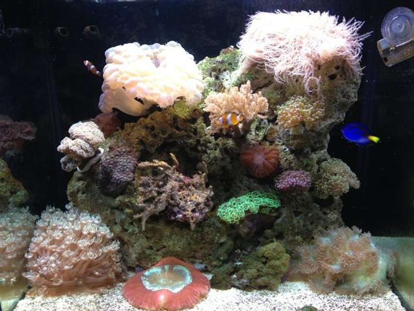 Rated #42: 35 Gallons Reef Tank - rsm 130d