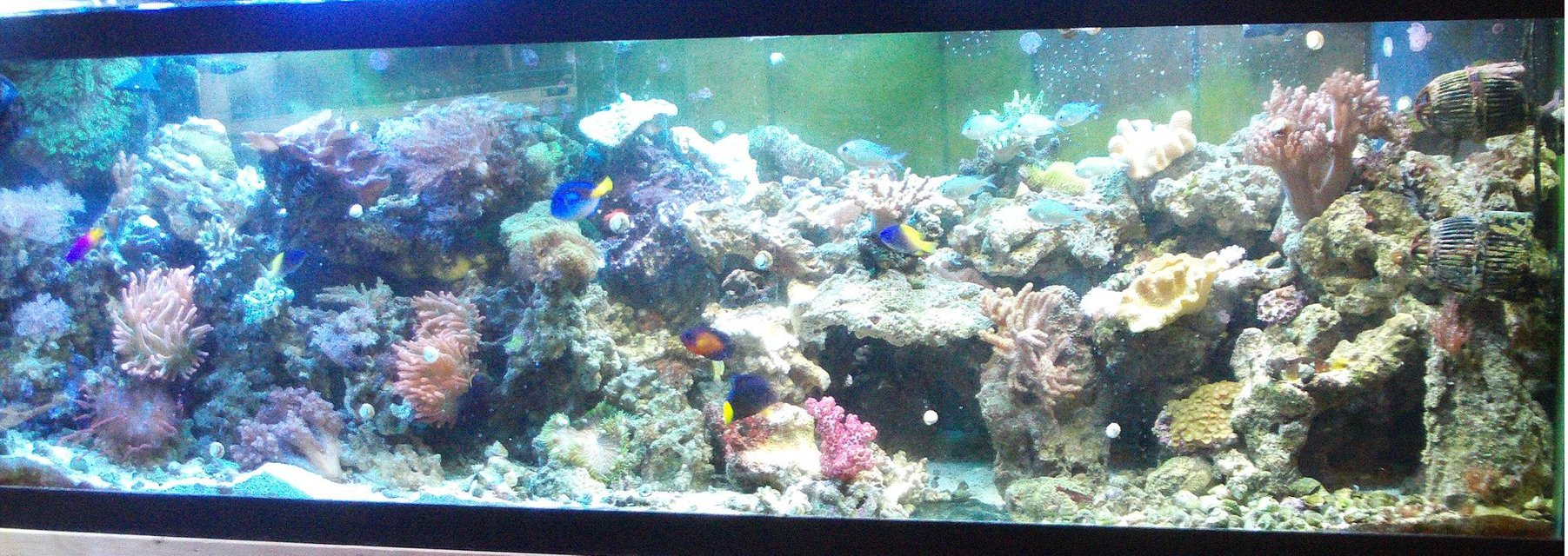 Rated #33: 277 Gallons Reef Tank - My 125 reef display