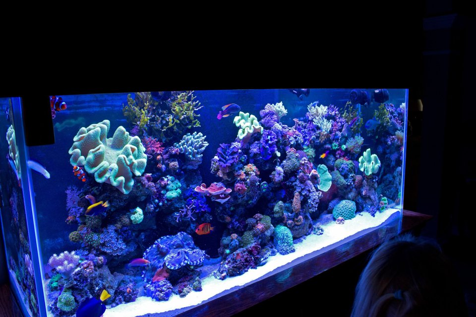 Rated #1: 140 Gallons Reef Tank - FTS