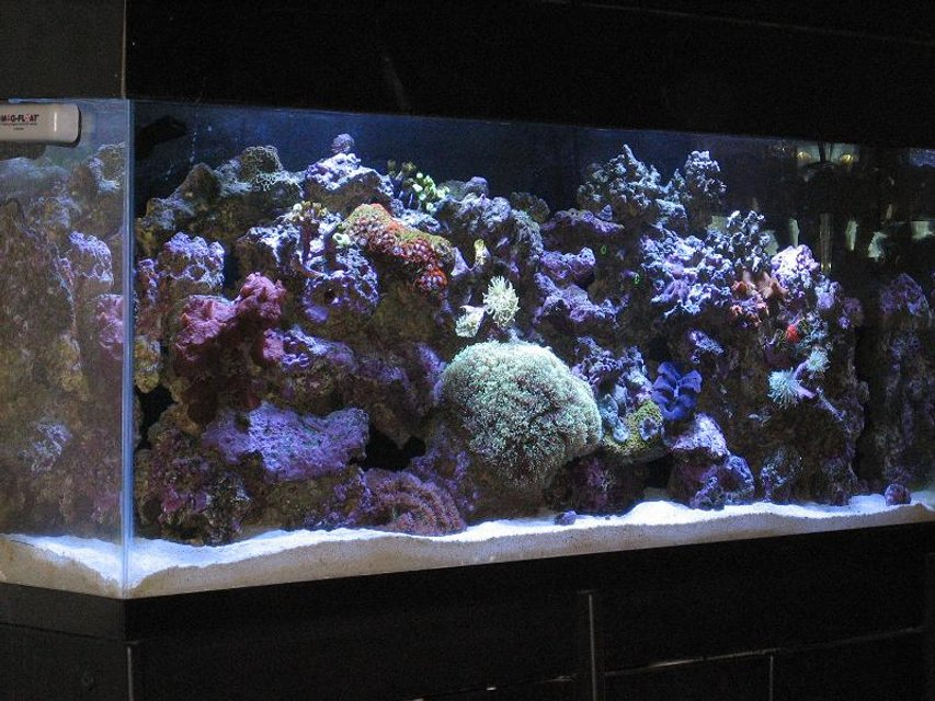 Rated #52: 55 Gallons Reef Tank - my reef