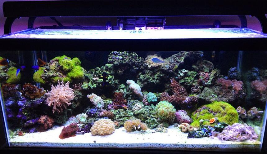 Rated #5: 45 Gallons Reef Tank - front shot of aquarium