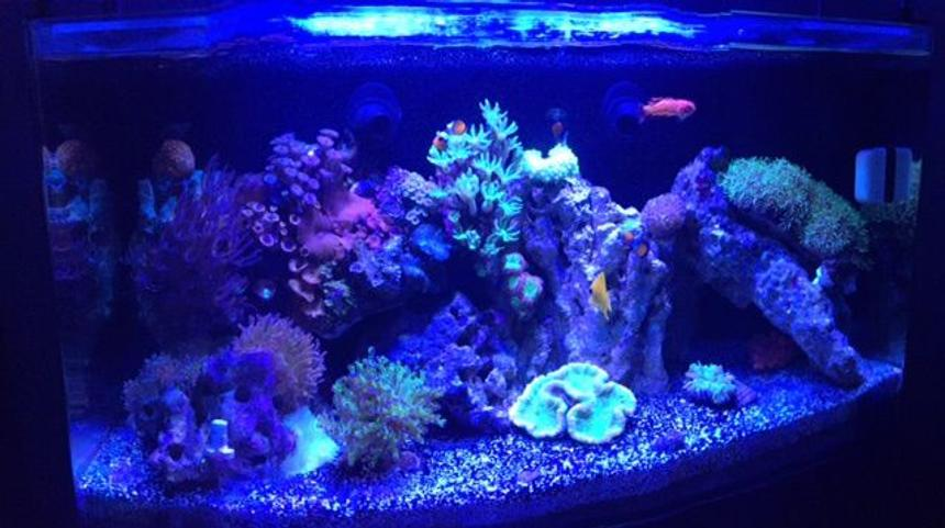 Rated #10: 16 Gallons Reef Tank - 16 Nuvo