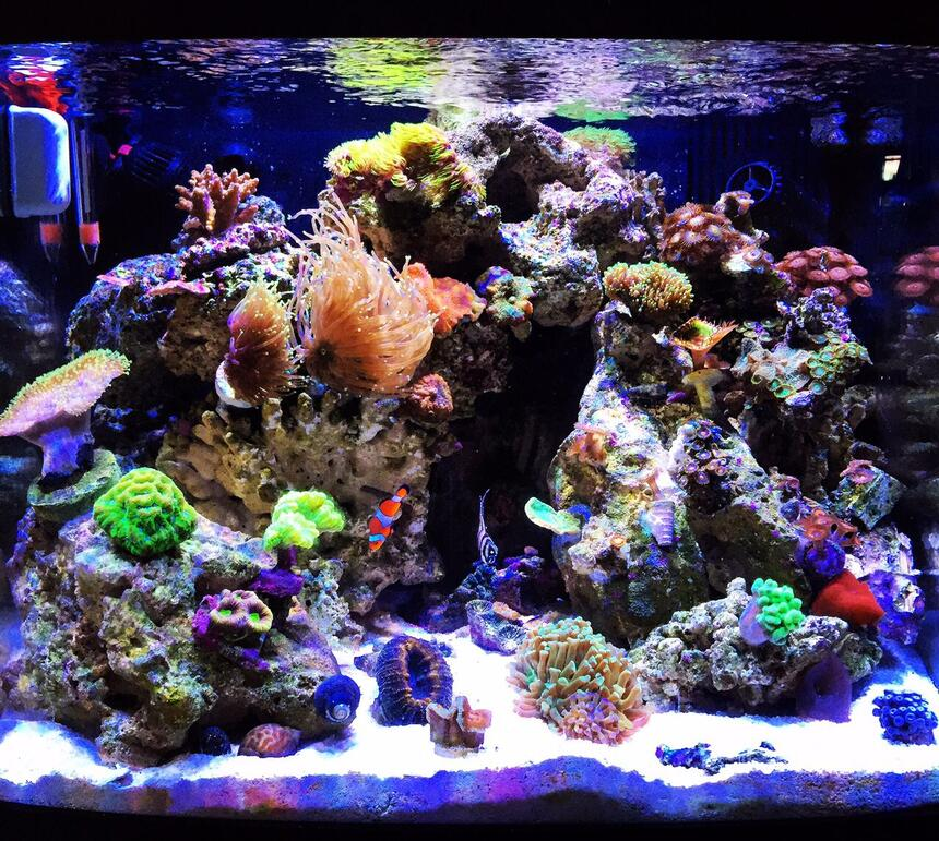Rated #3: 40 Gallons Reef Tank - My 29 Gallon Biocube with Ecotech Radion lighting