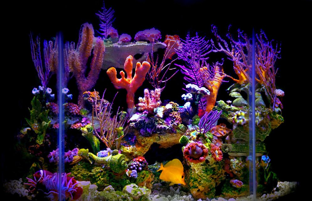 Rated #1: 23 Gallons Reef Tank - My 23 gallon flat back hexagonal reef tank.