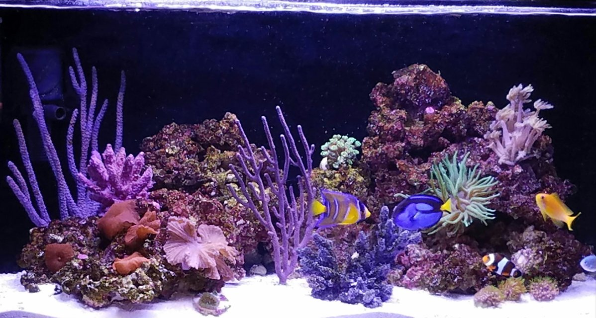 Rated #9: 20 Gallons Reef Tank - My reef tank
