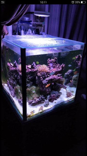 Rated #4: 52 Gallons Reef Tank - Cube corner tank