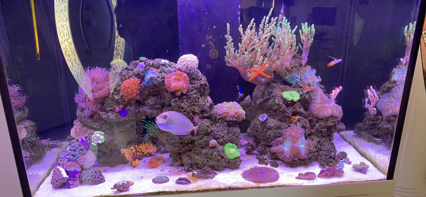 Rated #5: 85 Gallons Reef Tank - First upload to the site. :)
