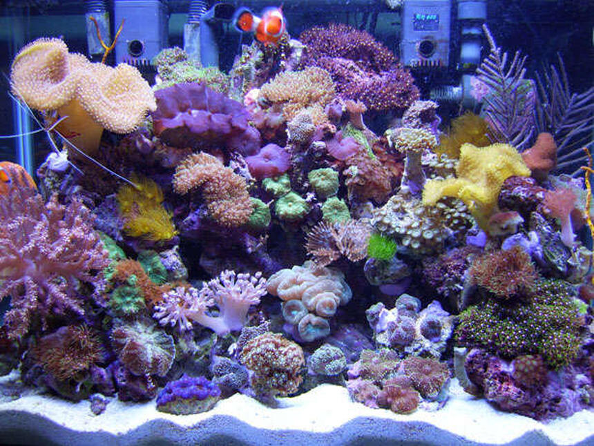 Rated #9: 20 Gallons Reef Tank - 20 Gallon H