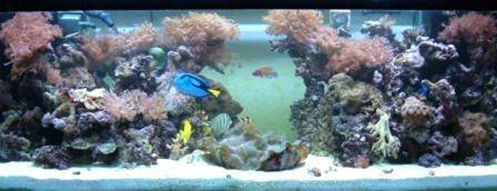 Rated #79: 180 Gallons Reef Tank - midday