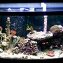 72 gallons reef tank (mostly live coral and fish) - The Tank at 190 days from initial set up.