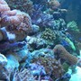 100 gallons reef tank (mostly live coral and fish) - HERE YOU GO