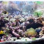 reef tank (mostly live coral and fish) - Acropora Reef