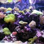 90 gallons reef tank (mostly live coral and fish) - mixed reef tank