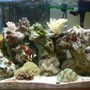 29 gallons reef tank (mostly live coral and fish) - My precious.....