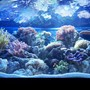 100 gallons reef tank (mostly live coral and fish) - 72 gal bow