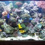 120 gallons reef tank (mostly live coral and fish) - most recent pic of my tank