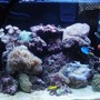 30 gallons reef tank (mostly live coral and fish) - 2 months old