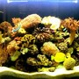 84 gallons reef tank (mostly live coral and fish) - from the front
