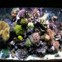 180 gallons reef tank (mostly live coral and fish) - 115 gallon tank aqamedic 250 hqi. Basic setup