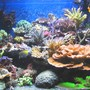100 gallons reef tank (mostly live coral and fish) - After 6 months..