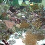 53 gallons reef tank (mostly live coral and fish) - 53 Gallon Corner Tank