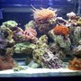30 gallons reef tank (mostly live coral and fish) - my first 30gallon at 2.5 months