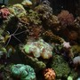 37 gallons reef tank (mostly live coral and fish) - full view