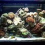 30 gallons reef tank (mostly live coral and fish) - 4 months