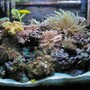 29 gallons reef tank (mostly live coral and fish) - 29G Reef