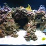 125 gallons reef tank (mostly live coral and fish) - Our 125 reef tank.