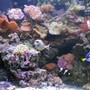 90 gallons reef tank (mostly live coral and fish) - naso Tang, maroon clown fish and Blue tang