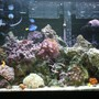 20 gallons reef tank (mostly live coral and fish) - after 7 months the tank look beautiful and so healty!!