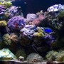 40 gallons reef tank (mostly live coral and fish) - My 40 gal Tank eve stage (only175w mh on, sorry for the closed polyps)