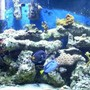 55 gallons reef tank (mostly live coral and fish) - reef tank