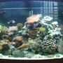 46 gallons reef tank (mostly live coral and fish) - Pic1
