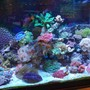 55 gallons reef tank (mostly live coral and fish) - most recent tank shot