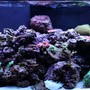 75 gallons reef tank (mostly live coral and fish) - PeaceinUSA's Reef Tank