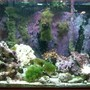 50 gallons reef tank (mostly live coral and fish) - the tank i have now