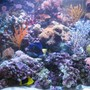 75 gallons reef tank (mostly live coral and fish) - 300l reef tank