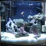 10 gallons reef tank (mostly live coral and fish) - 6 gallon nano cube, 1 clown fish, 1 cleaner shrimp, a emerald crab, for corals, pulsing xenia, mushrooms, various polyps