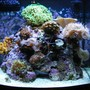 24 gallons reef tank (mostly live coral and fish) - latest
